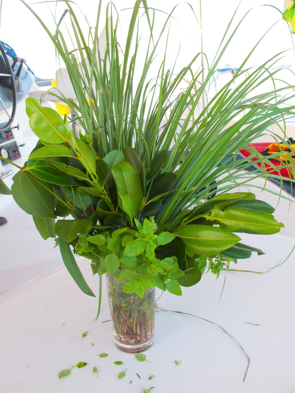 my wonderful wild herbs courtesy of Uncle Sam