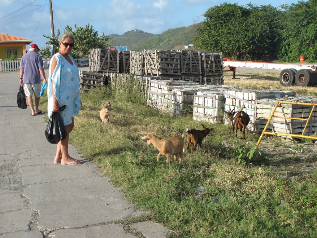 Penny & the goats, Canouan township