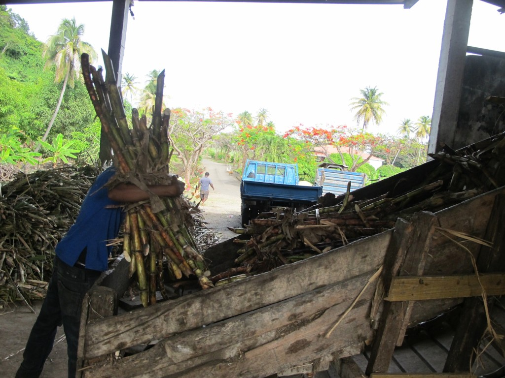 loading the sugar cane into the crusher