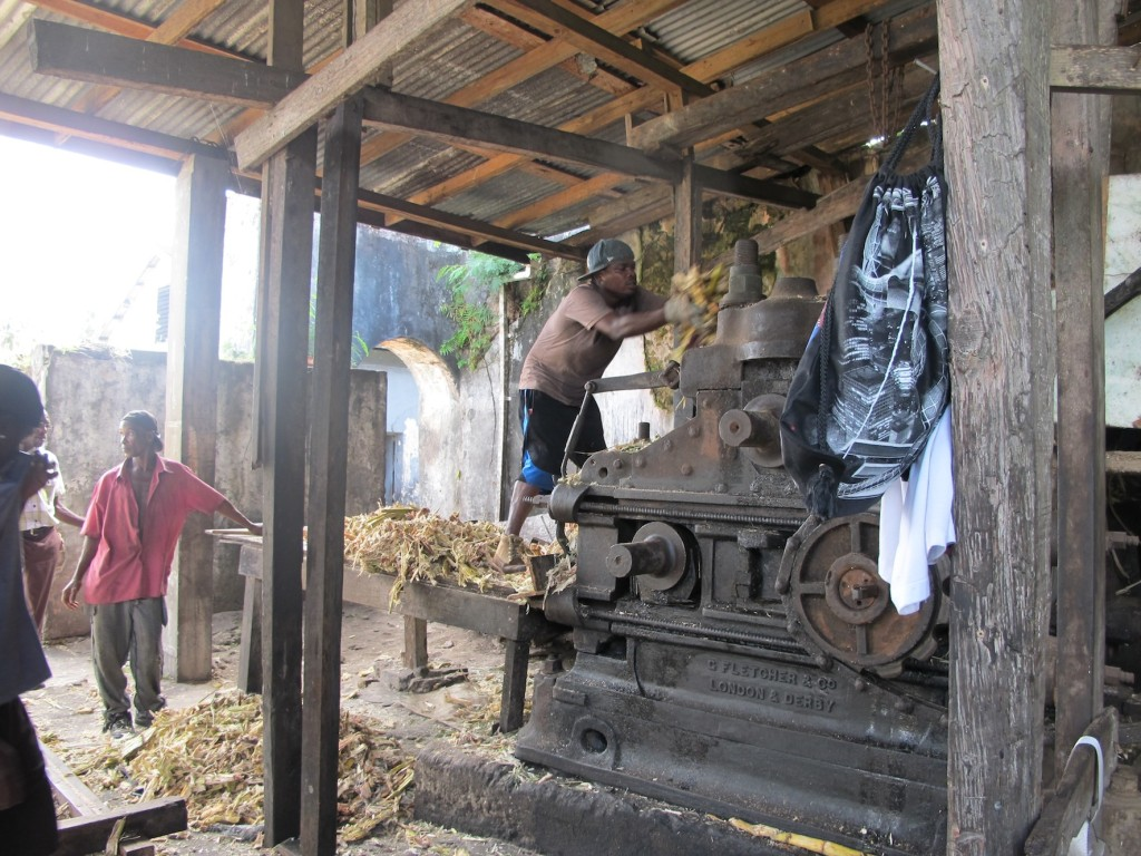 Hot, hard work at the sugar cane crusher