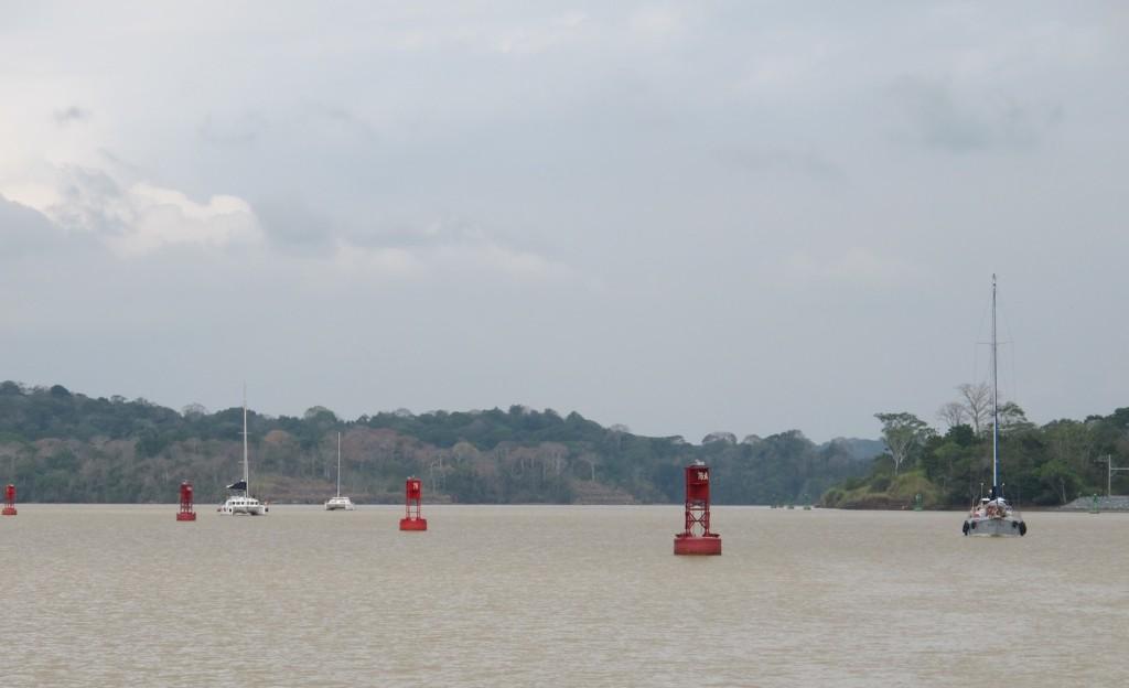 The convoy of yachts making their way through Gatun Lake