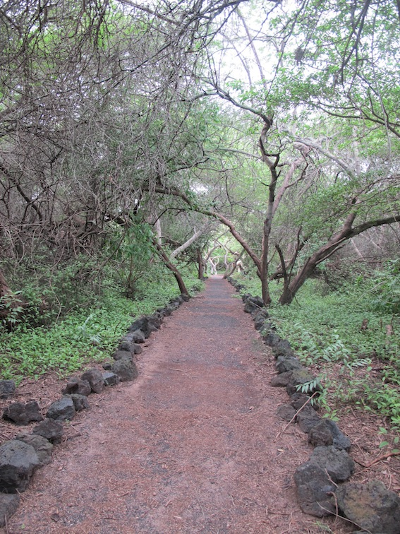 The walk to the tortoise breeding centre