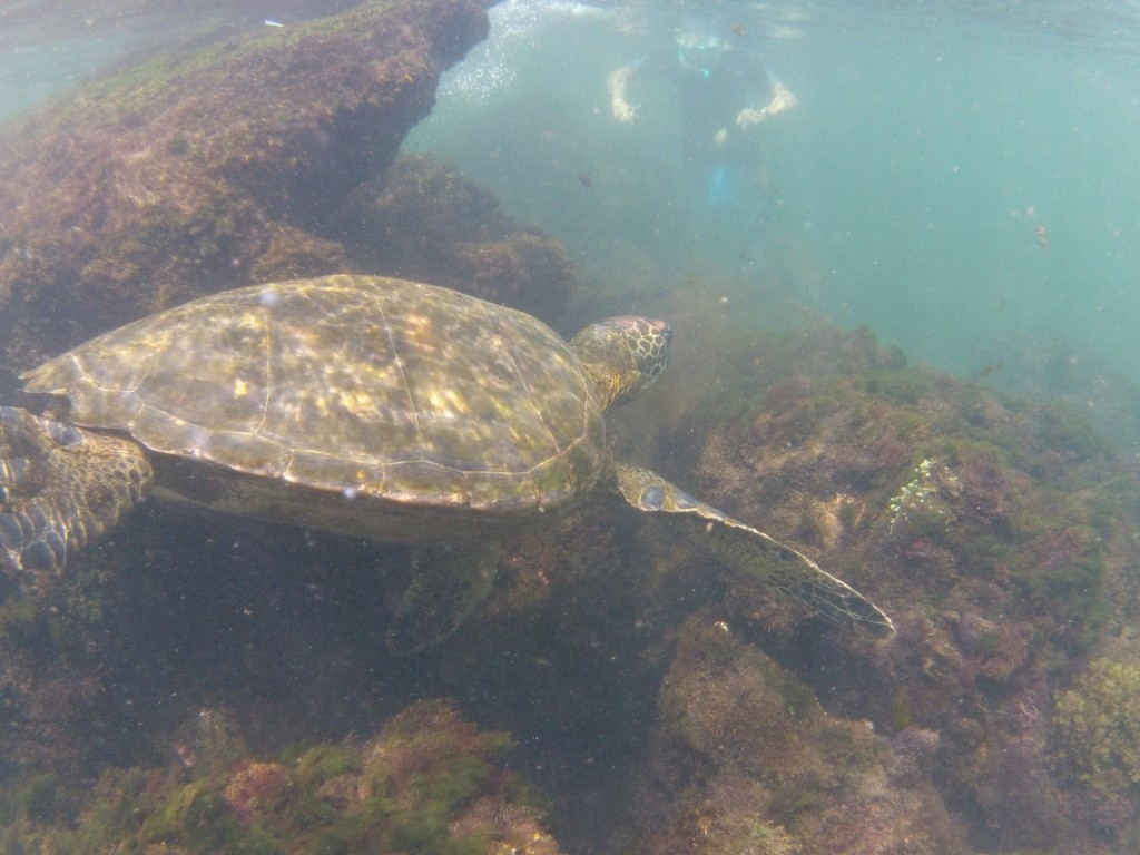 Di snorkelling with the giant turtles at Cabo Rosa