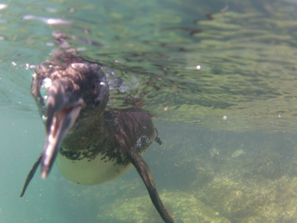 Up close and personal with the penguins