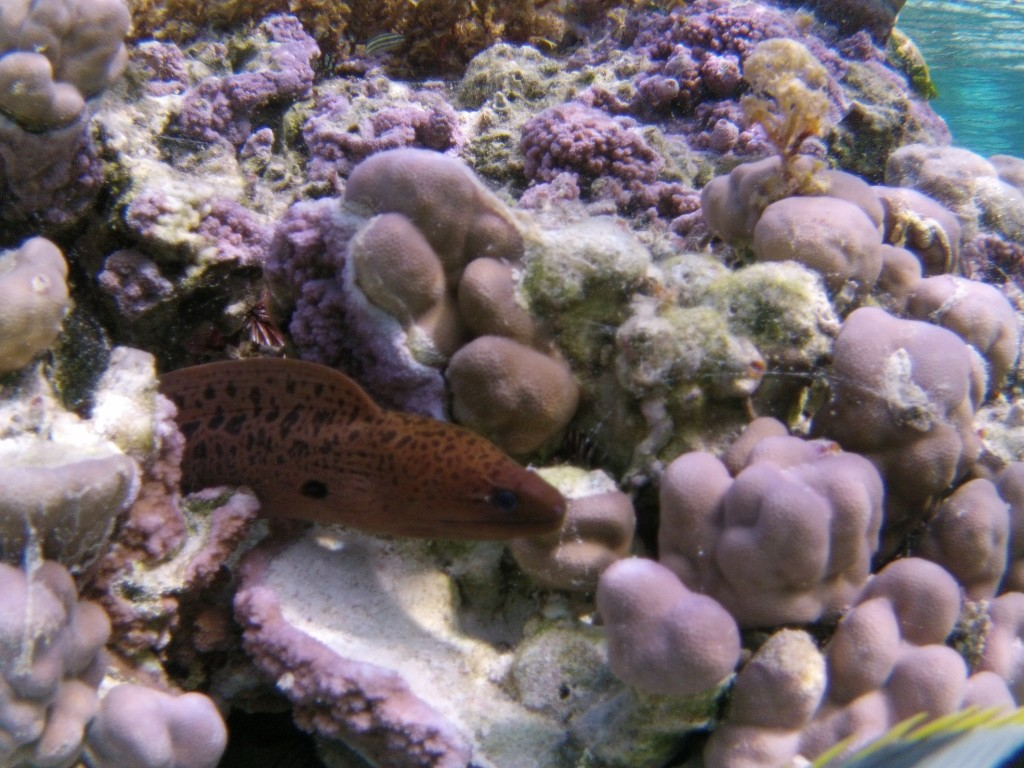 A friendly moray eel popped out to say hello