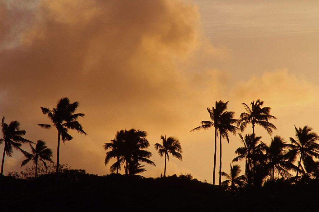 sunset palms, Vakaeitu Island