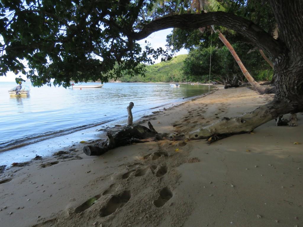 The beachfront, Waisalima Bay