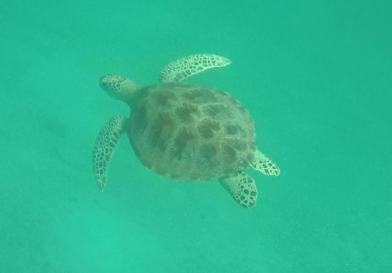 hello mr turtle