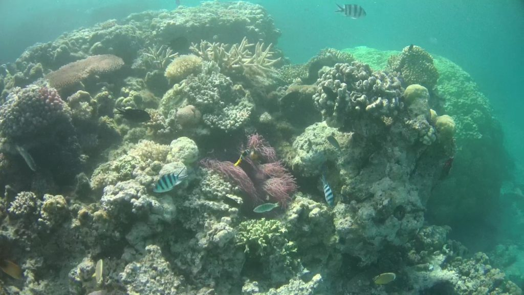 an abundance of fish life and interesting snorkelling